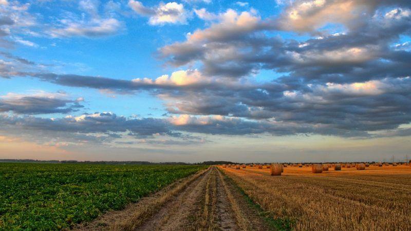 Rolnictwo w UE